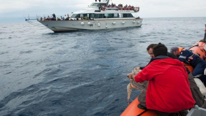 gita con l'acquario di genova per rilasciare la tartaruga mirella - Acquario Di Genova Orari Biglietteria
