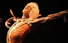 Body Worlds, cadaveri plastinati ai Magazzini del Cotone
