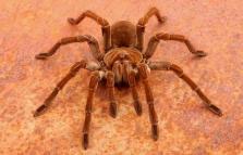 Spiders. I più grandi ragni del mondo al Museo Doria