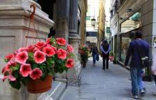 Via Luccoli in fiore, infiorata nel centro città