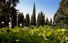 Visite guidate a Villa della Pergola