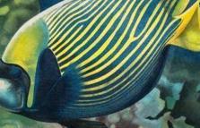 Piccoli grandi capolavori della natura, mostra di Savy