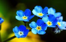 I Fiori Blu, ciclo di incontri