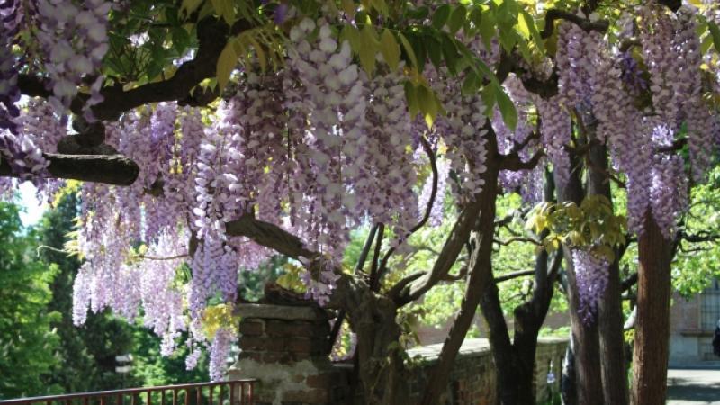Giardini Moderni Borgomanero : Incontriamoci in giardino: tra parchi ed eventi a torino e in piemonte